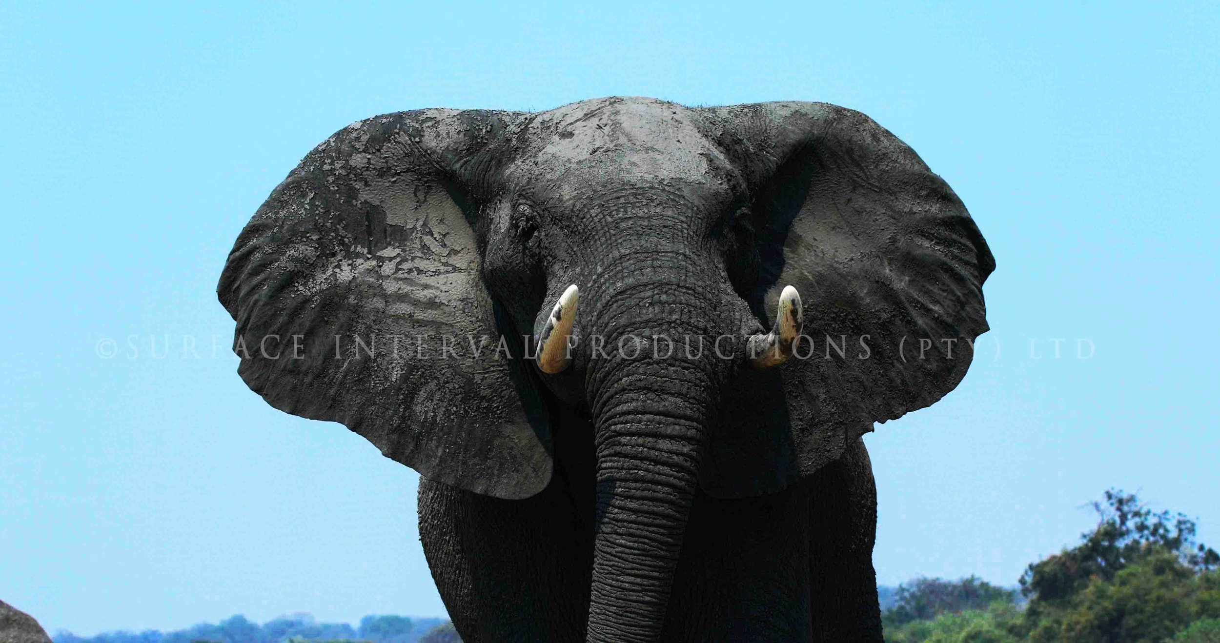 Elephant 000s.jpg
