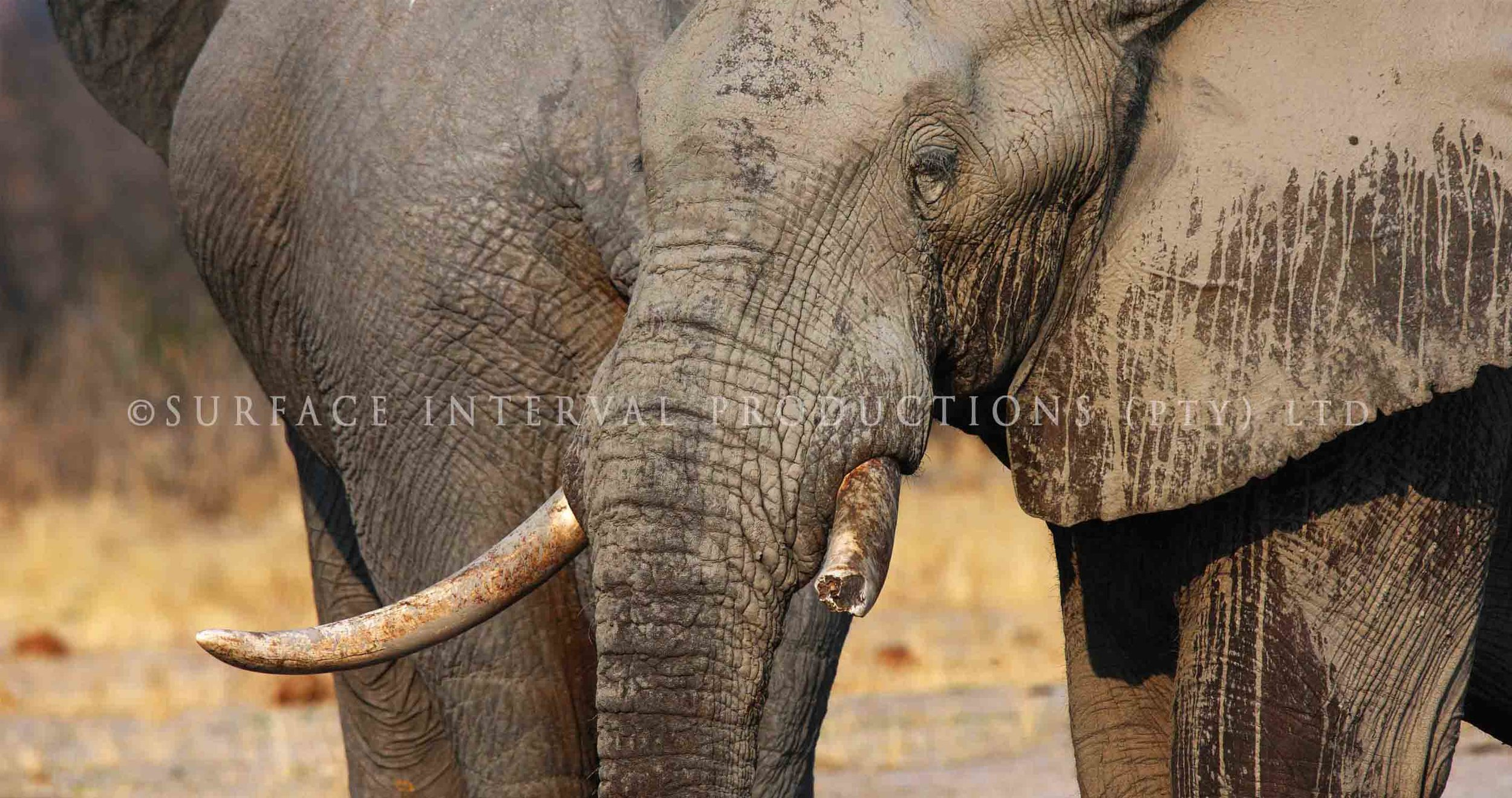 Elephant 001ss.jpg