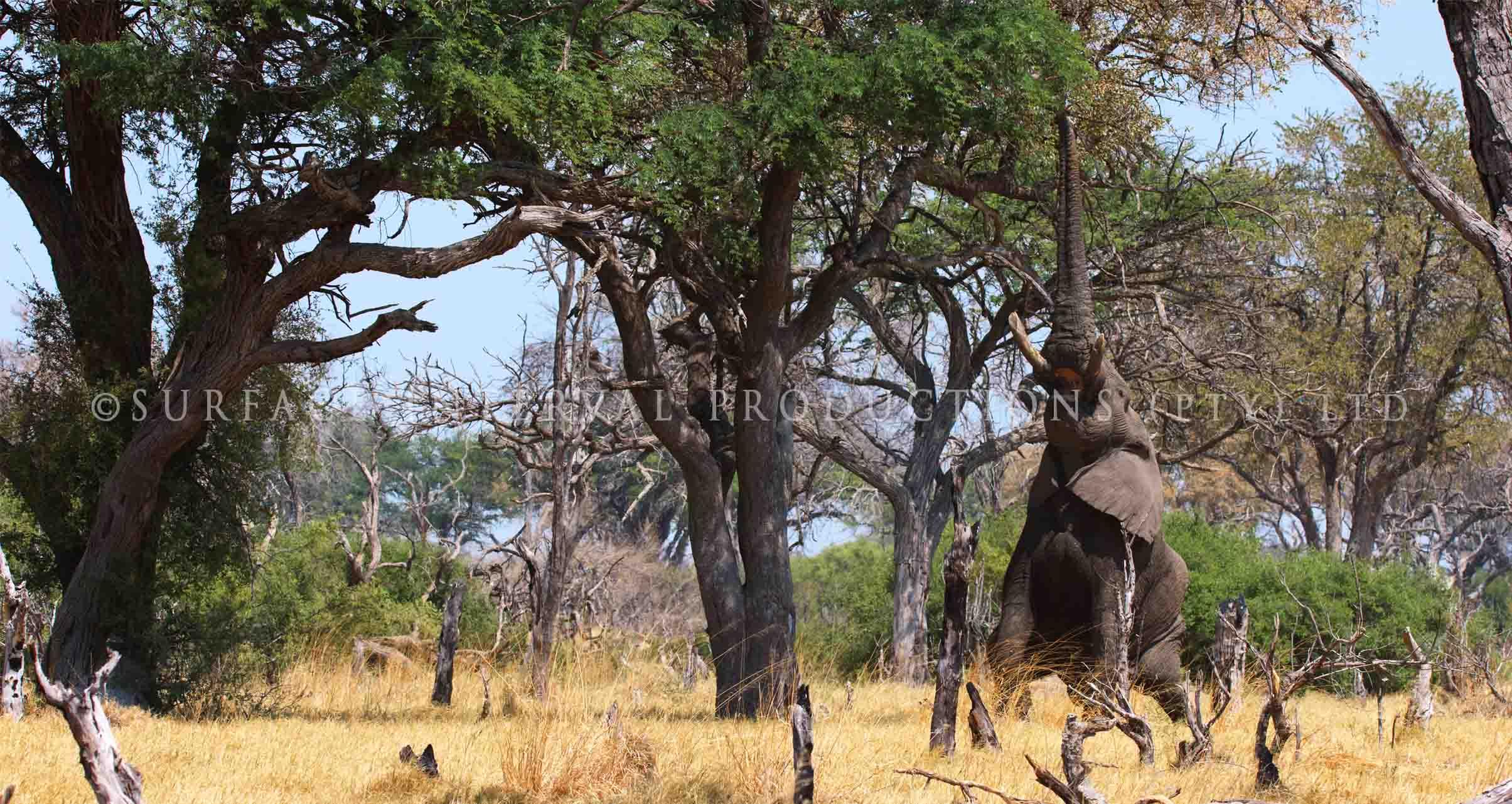 Elephant 006s.jpg