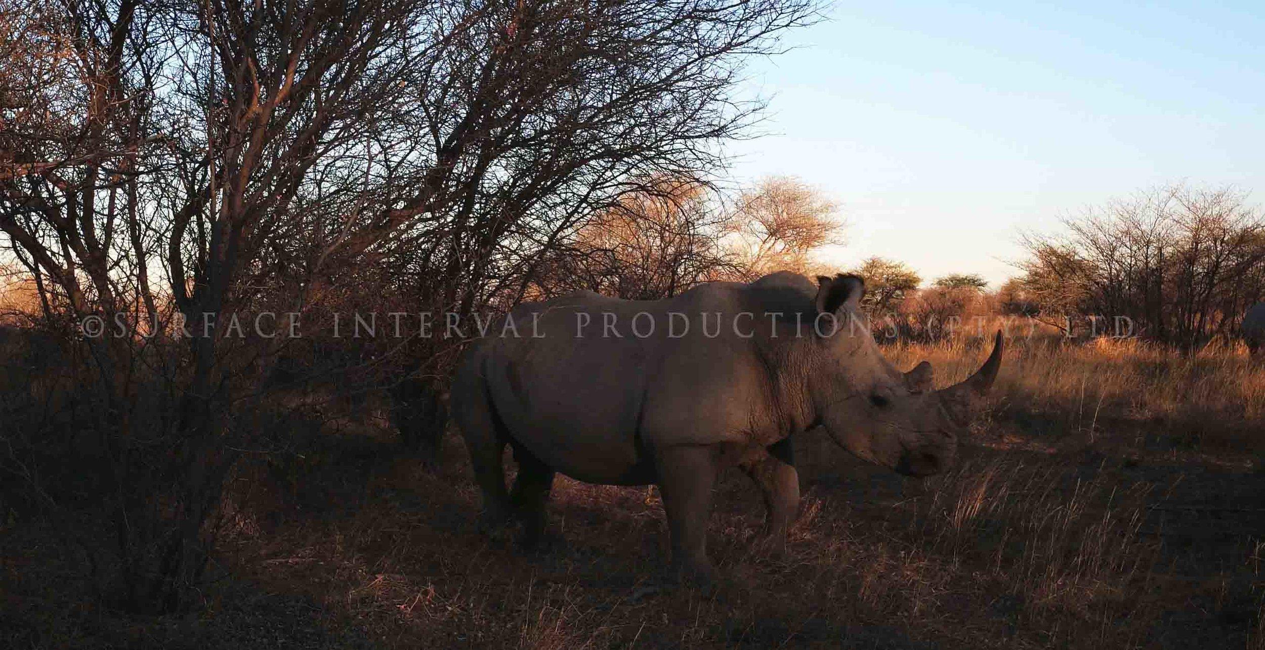 Rhino 002ss.jpg