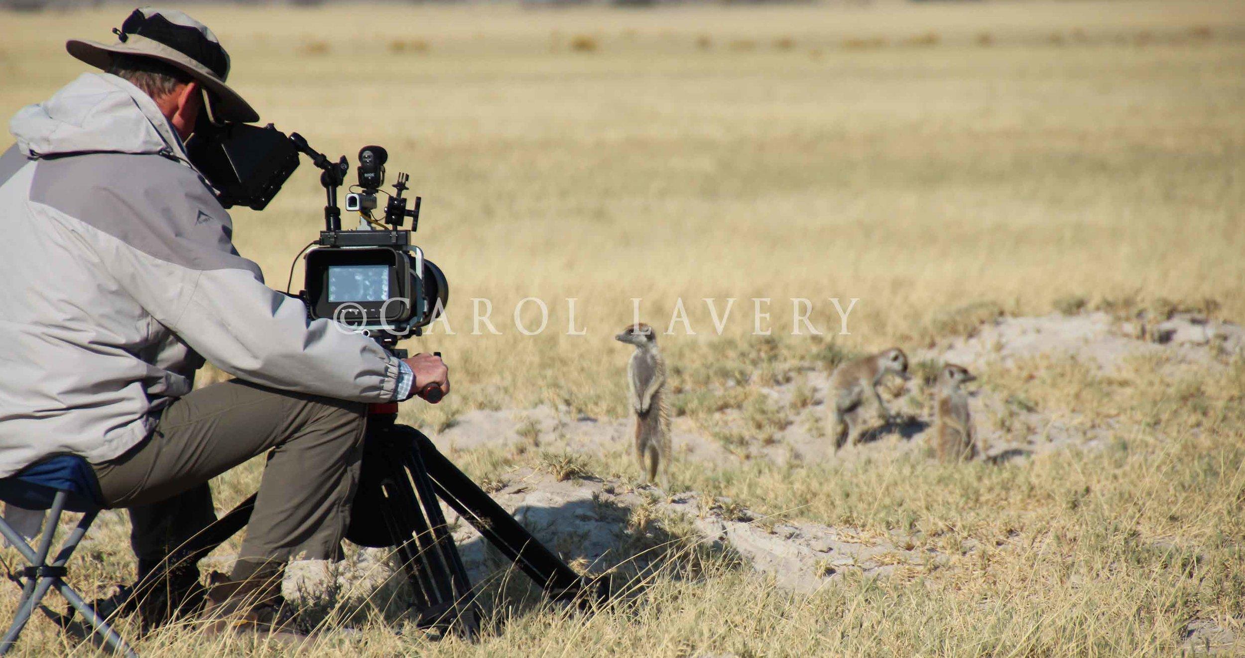 Me filming Meercats.jpg