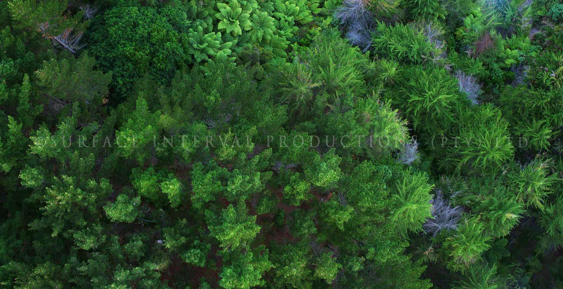 Whangaihe Bay 03.jpg