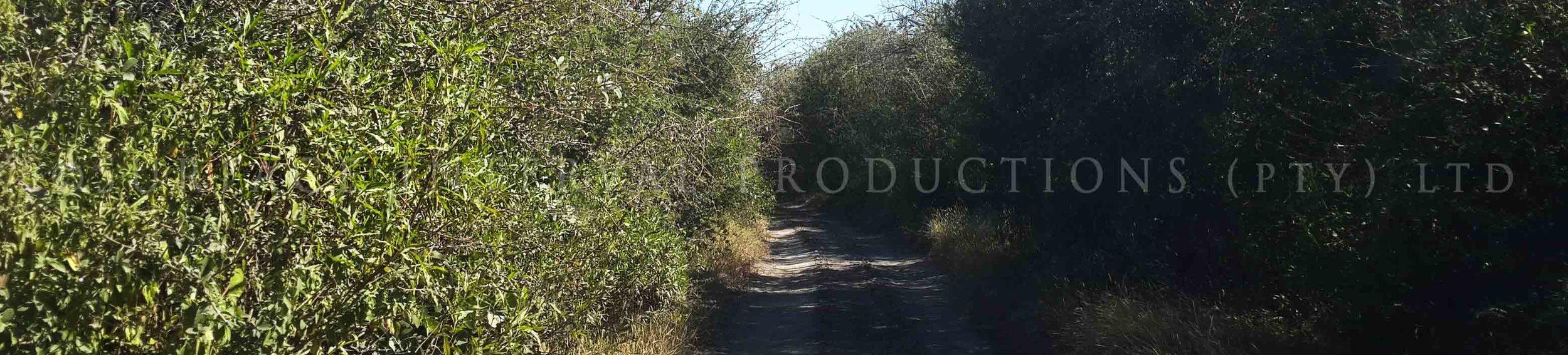 Road 17.jpg
