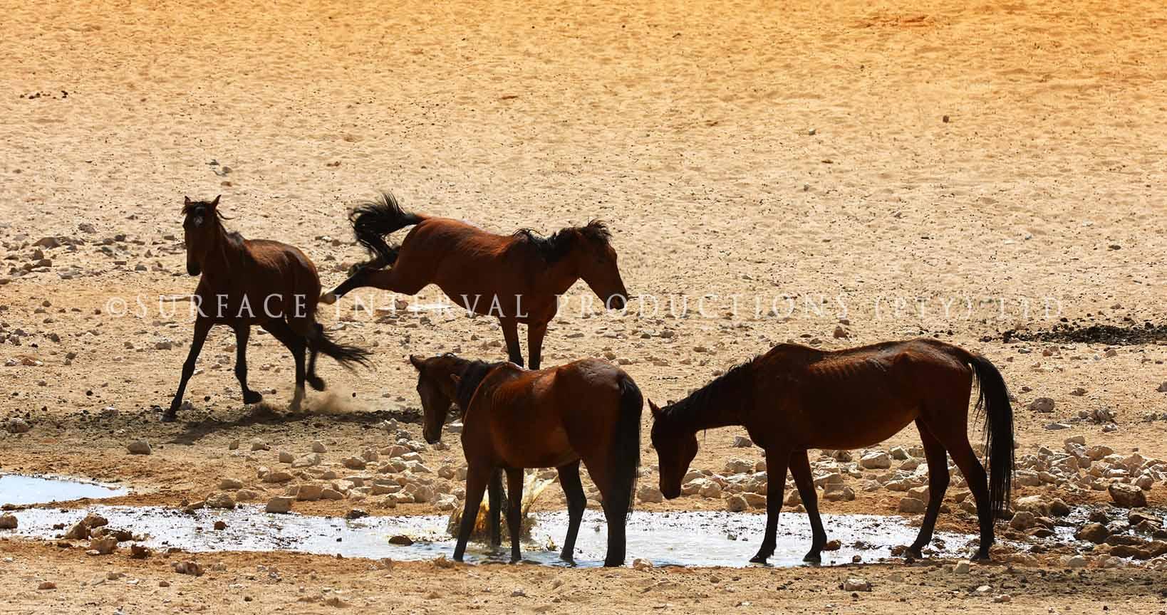 Ause Wild Horses 03.jpg