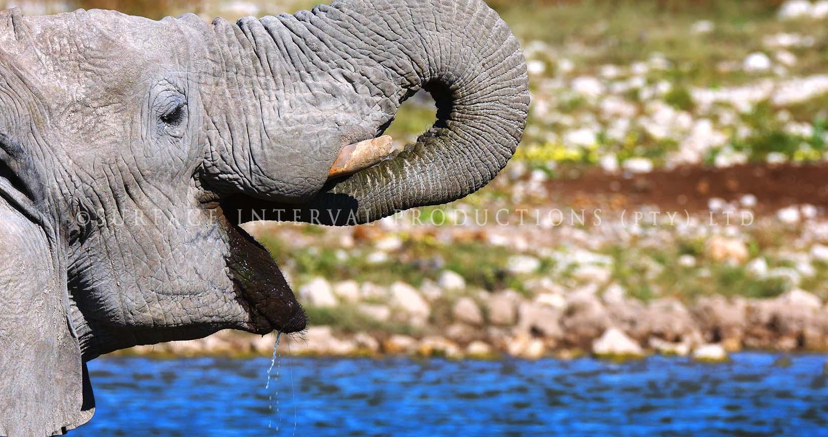 Elephant dead 05.jpg
