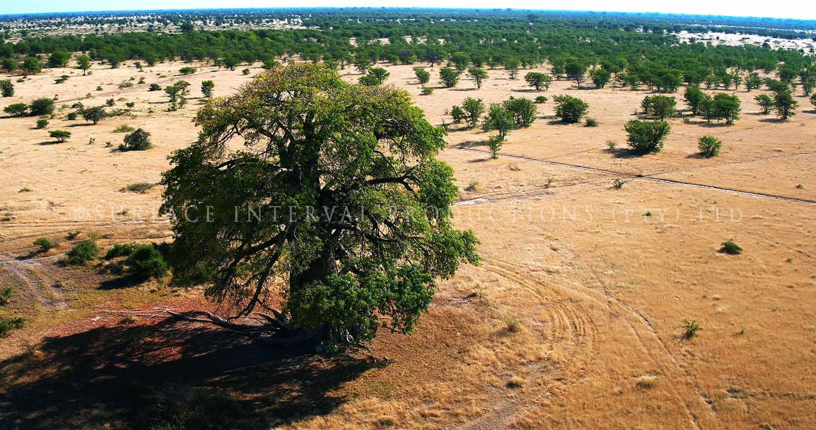 Baobab 12.jpg