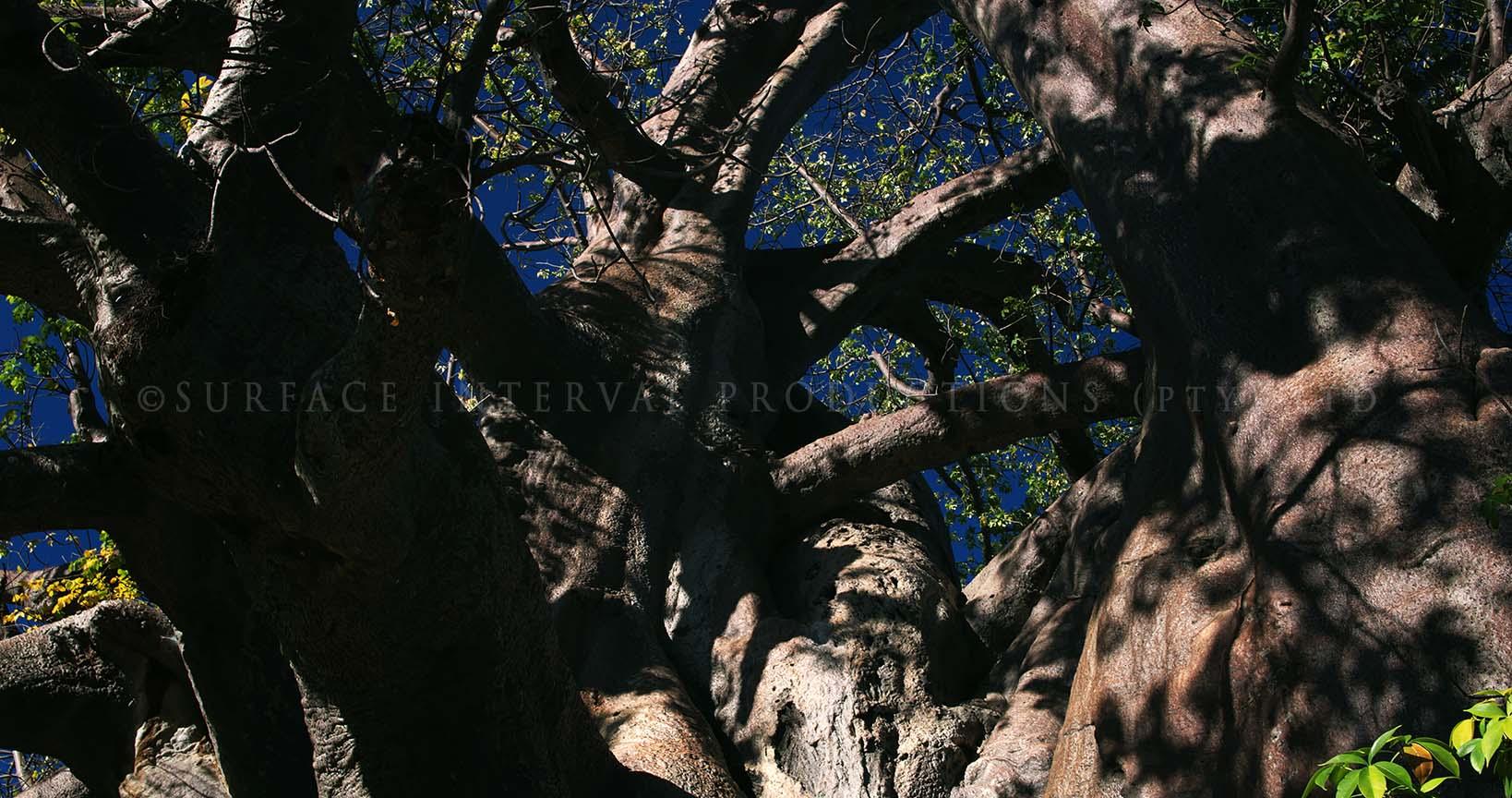 Baobab 13.jpg