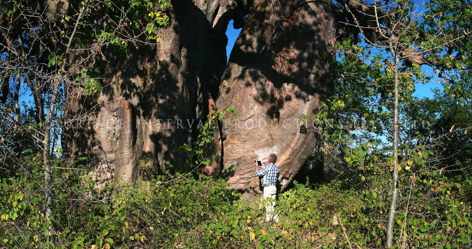 Baobab 14.jpg
