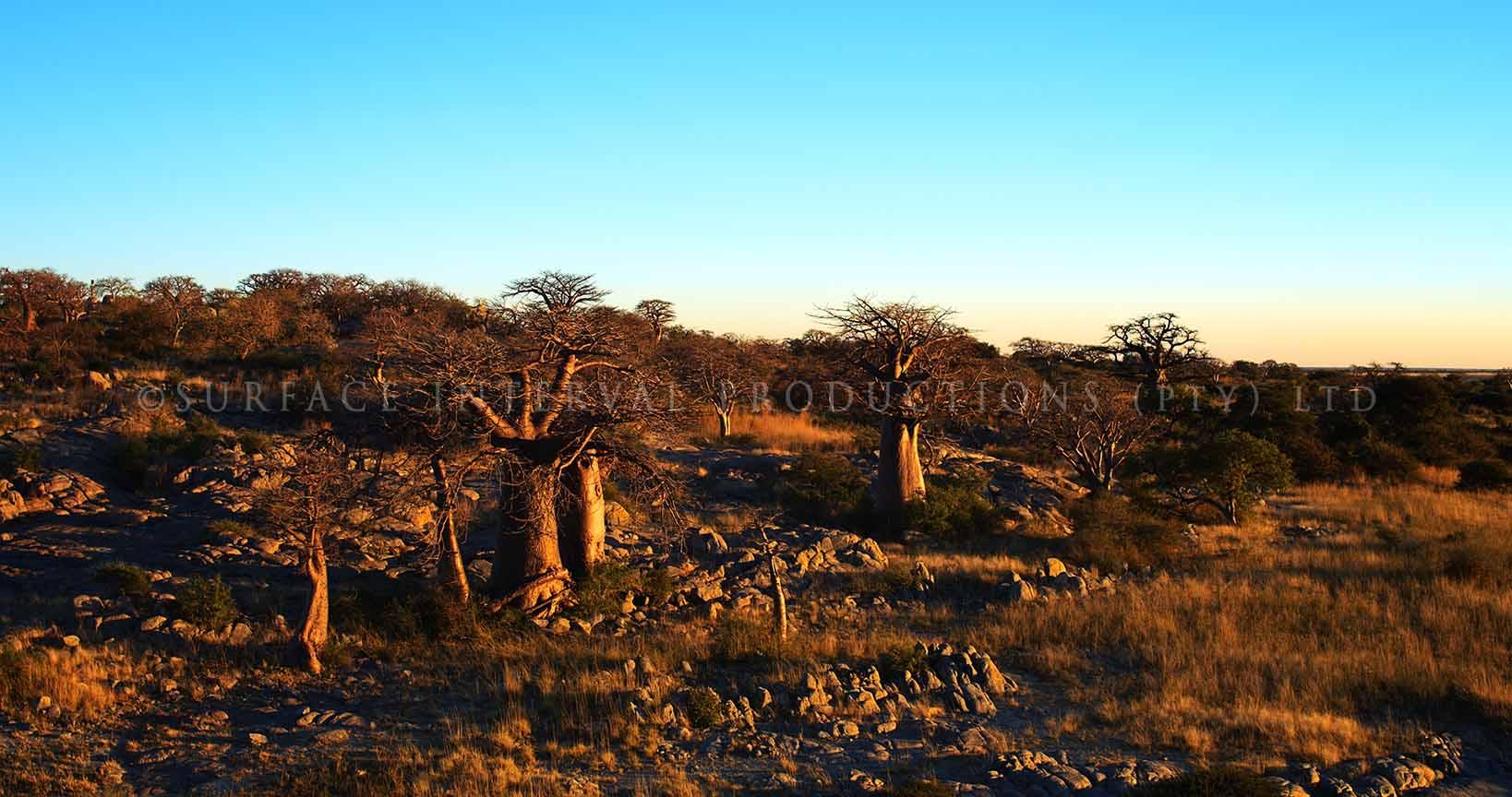 Baobab 16.jpg