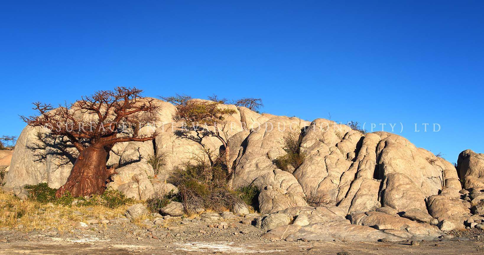 Baobab 20.jpg