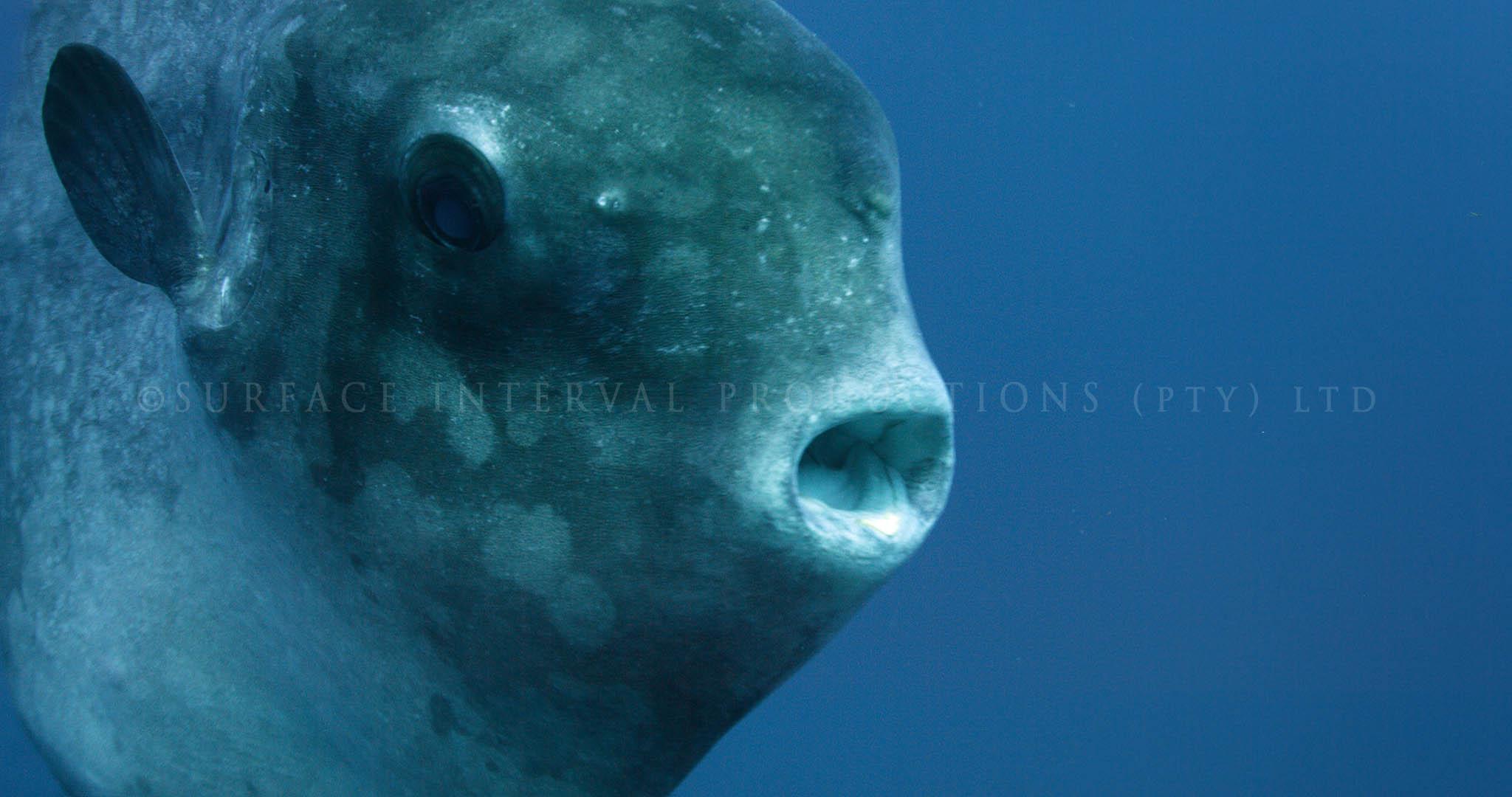 Mola 06.jpg