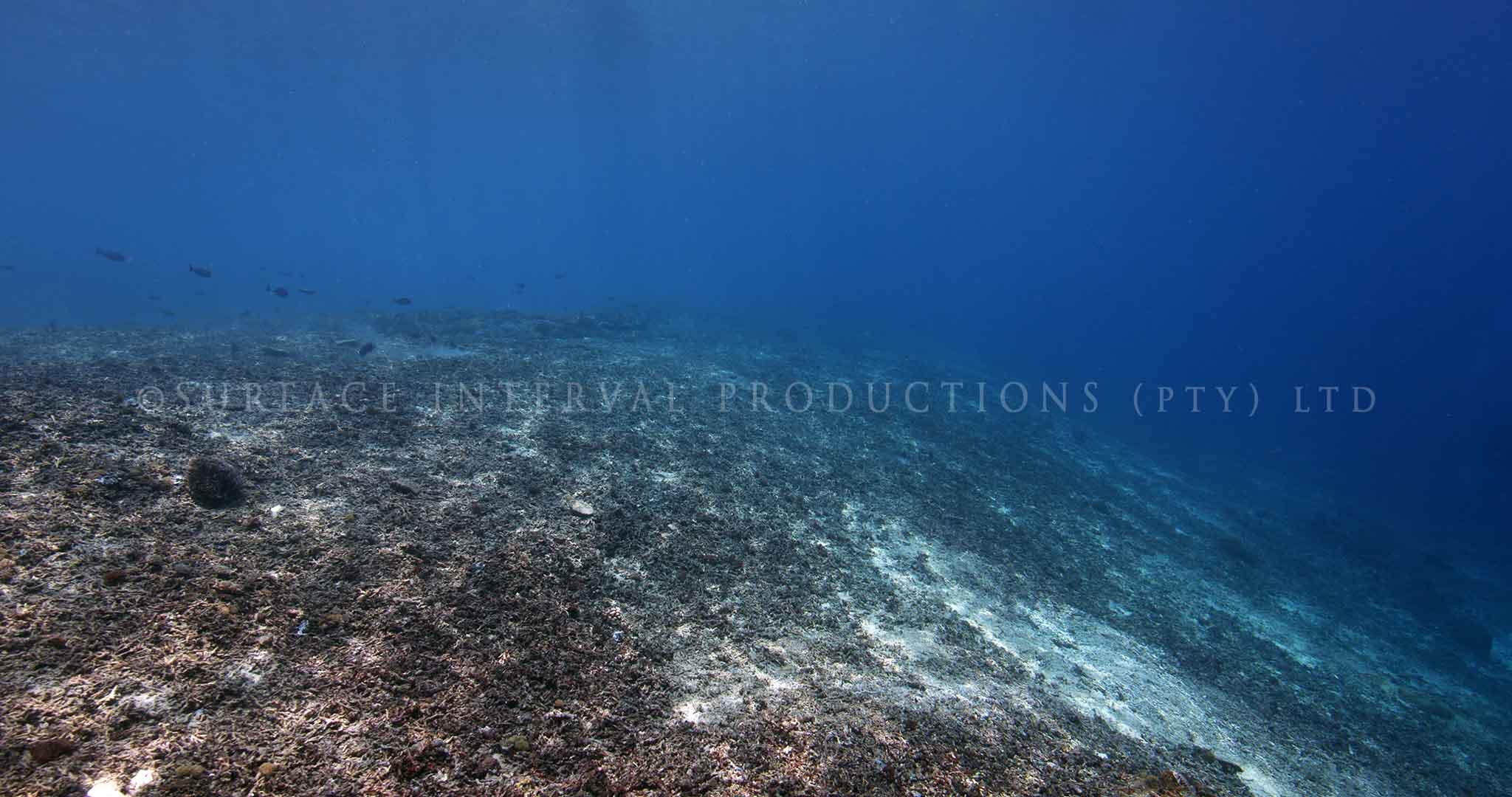 Coral Damage 02.jpg