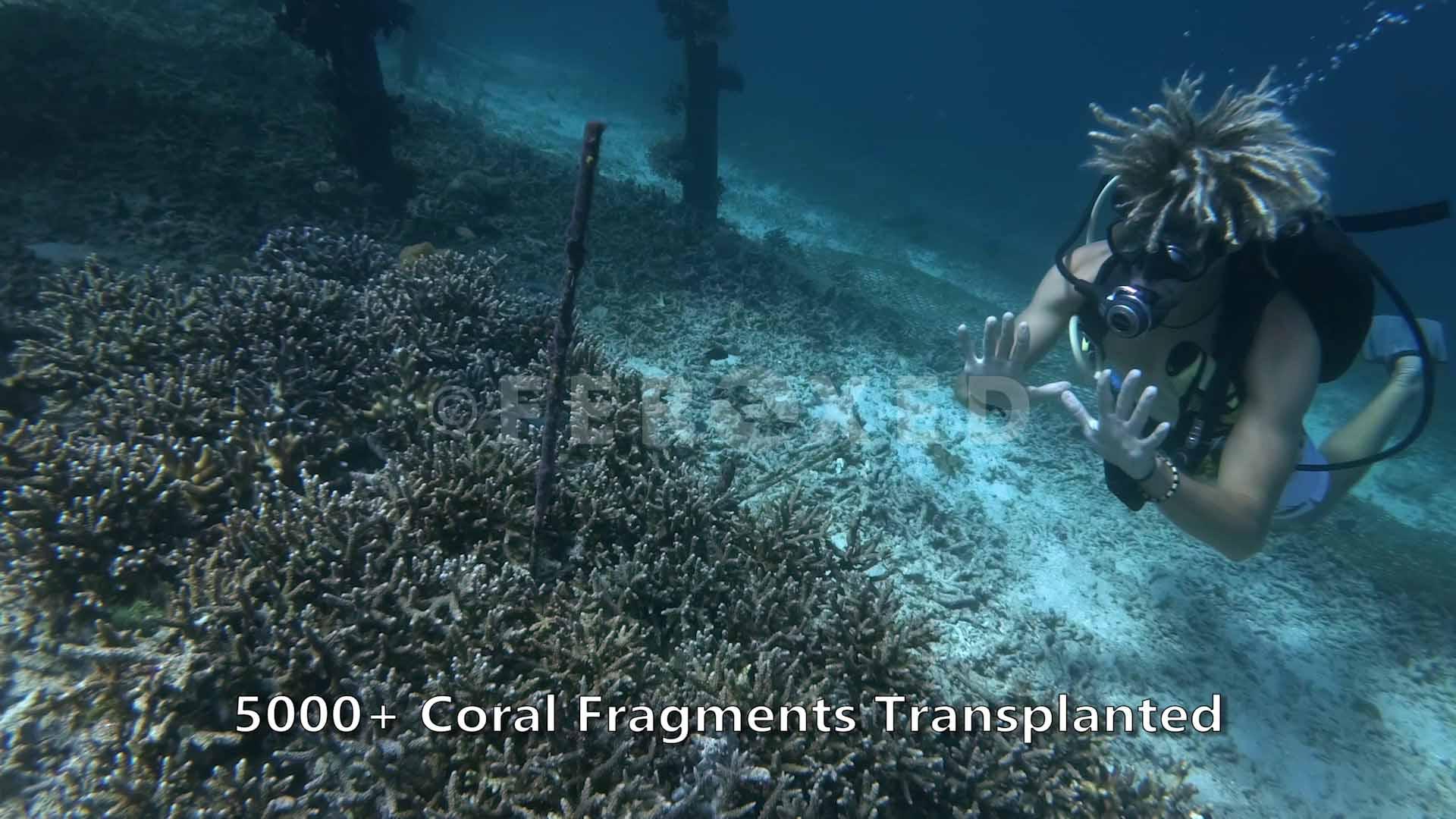 Coral 06.jpg