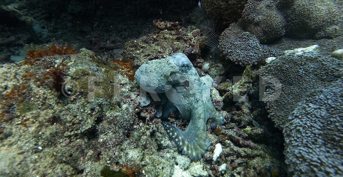 Octopus 01.jpg