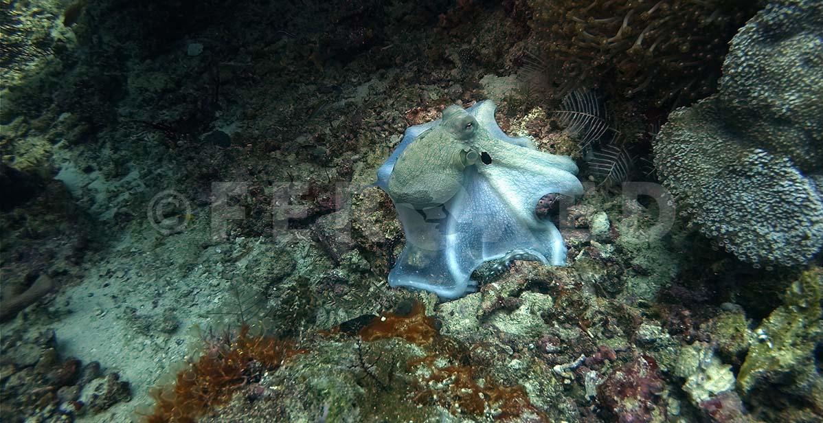 Octopus 03.jpg