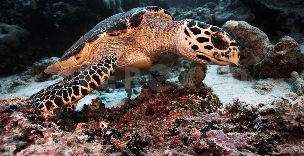 Turtle 01.jpg