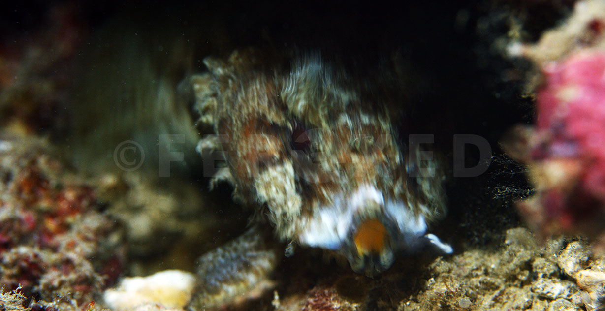 Toadfish 15.jpg