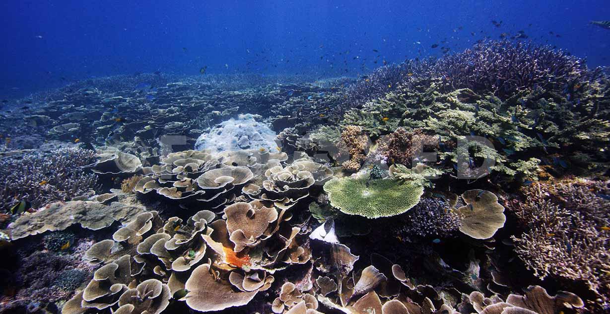 Reef 01.jpg