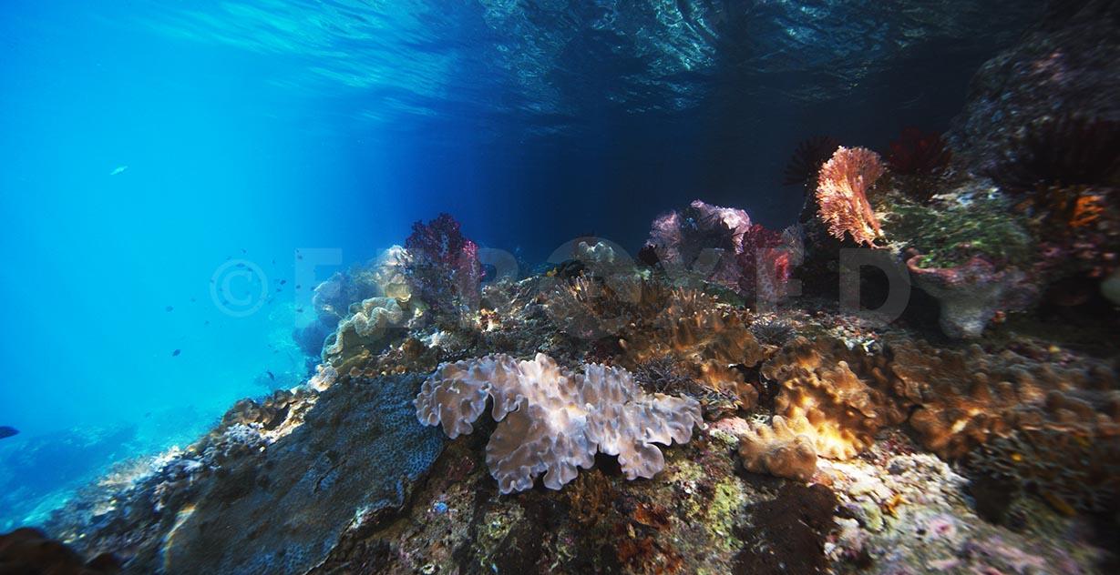 Reef 02.jpg