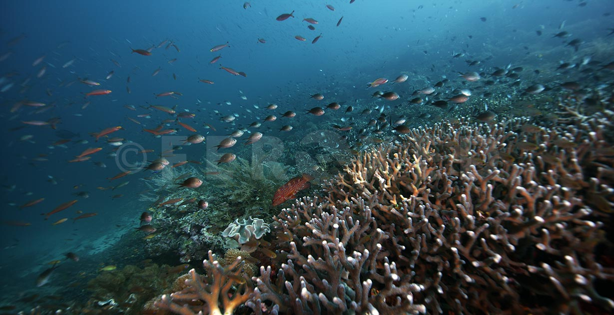 Reef 07.jpg