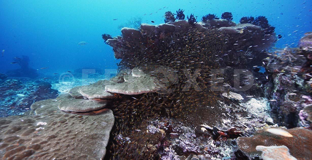Reef 05a.jpg