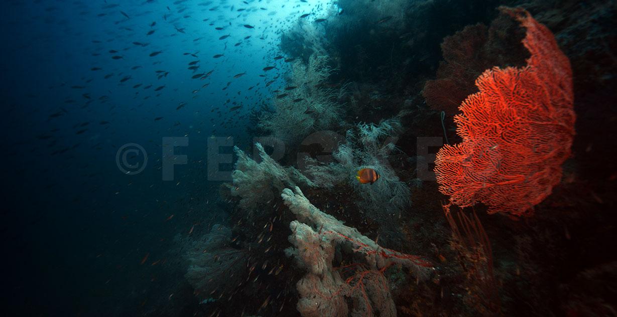 Reef 10.jpg