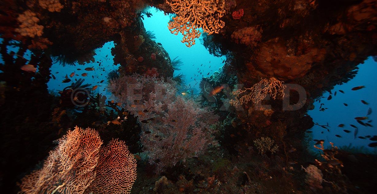Reef 11.jpg