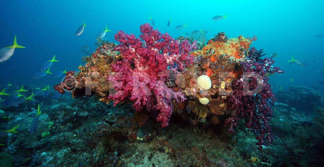 Reef 21.jpg