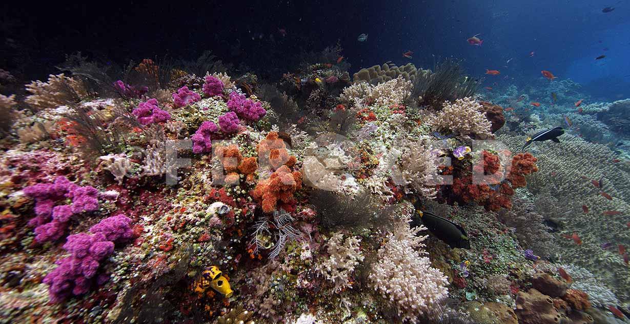 Reef 27.jpg