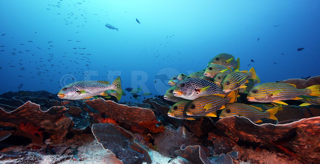 Sweetlips 04.jpg