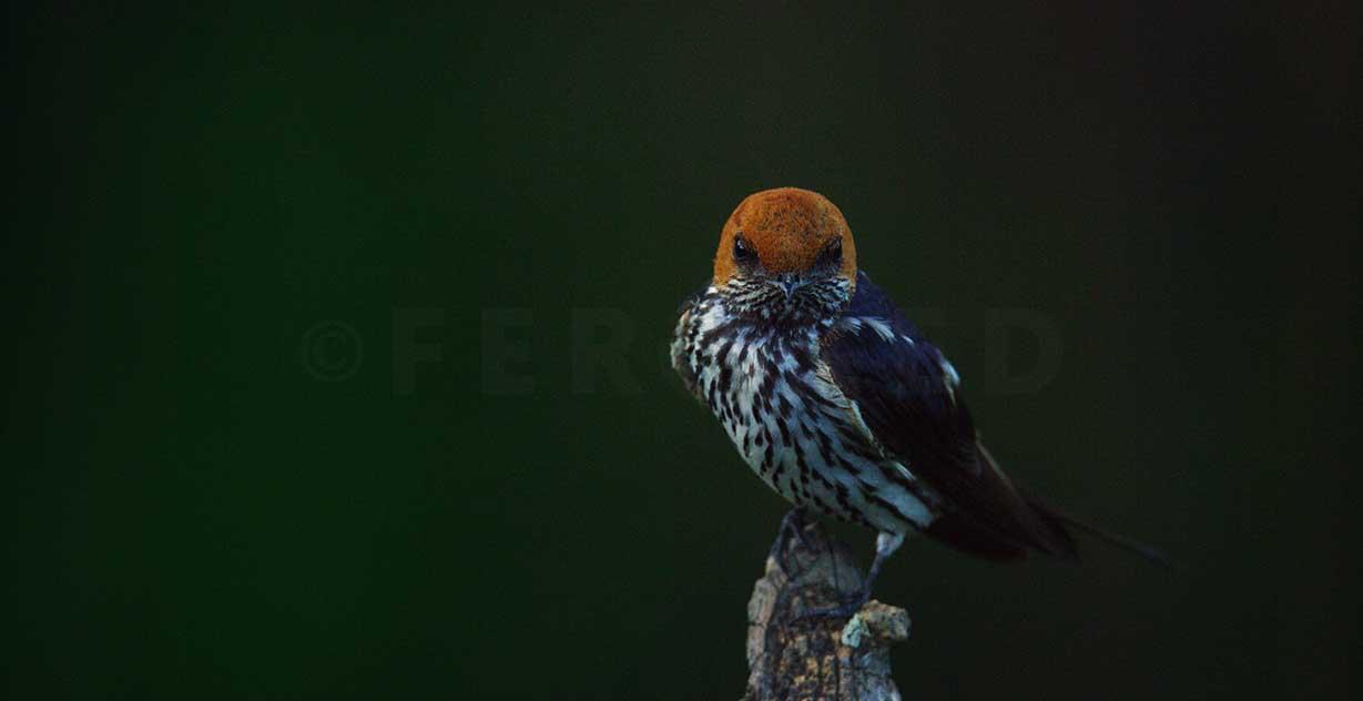 birdADDO_1.370.2.jpg