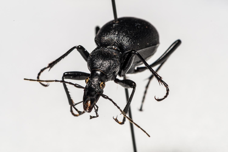FVDB_BeetlesMacro-4037.jpg