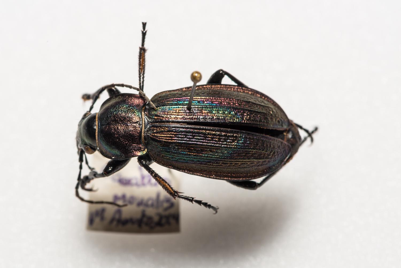 FVDB_BeetlesMacro-4042.jpg