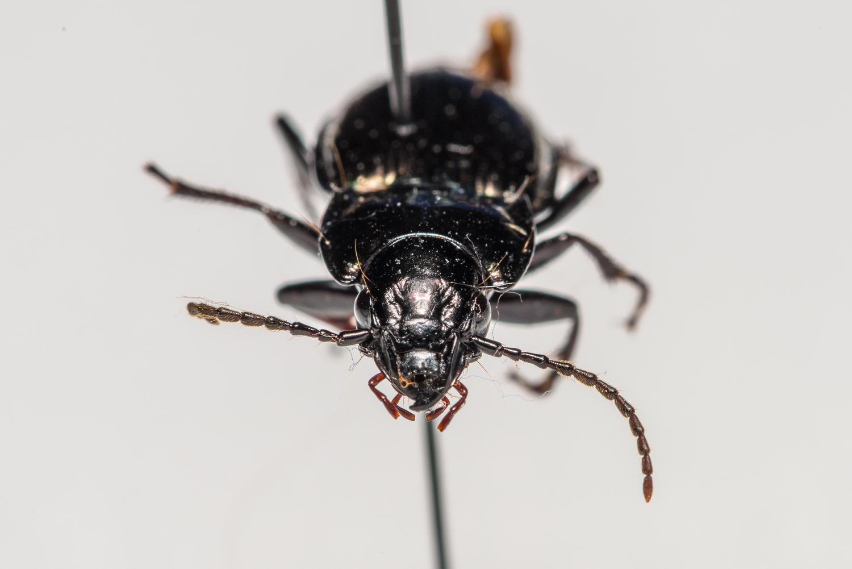 FVDB_BeetlesMacro-4063.jpg