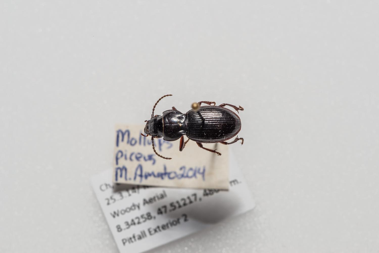 FVDB_BeetlesMacro-4087.jpg