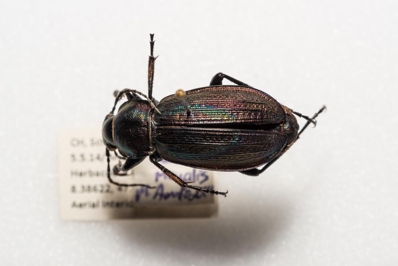 FVDB_BeetlesMacro-4106.jpg