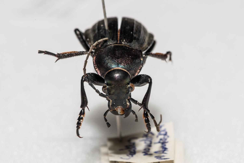 FVDB_BeetlesMacro-4119.jpg