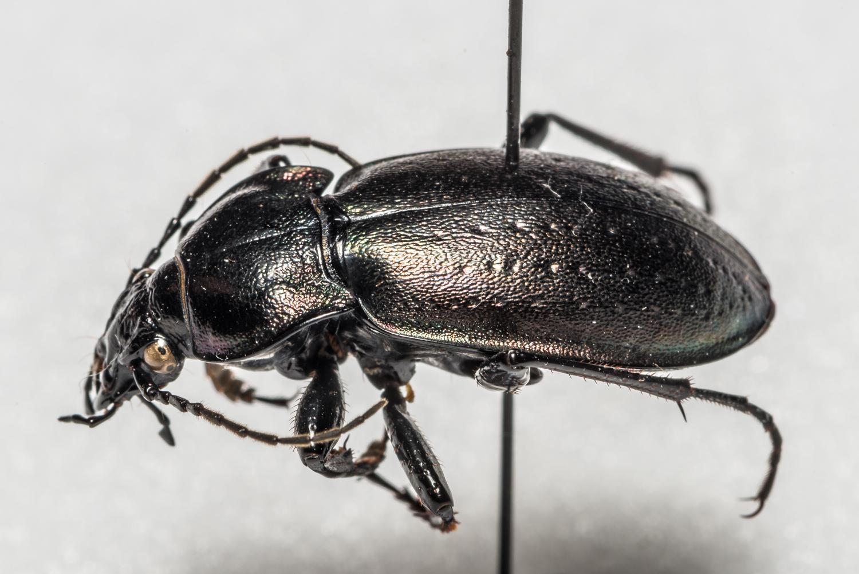 FVDB_BeetlesMacro-4022.jpg