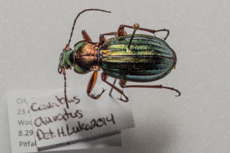 FVDB_BeetlesMacro-4025.jpg