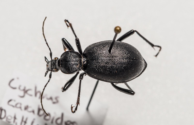 FVDB_BeetlesMacro-4033.jpg