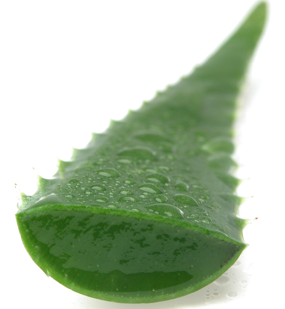 Aloe-Vera-Benefits.jpg