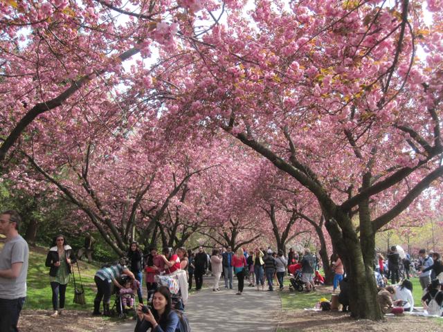 Brooklyn Botanic Garden, April 2013