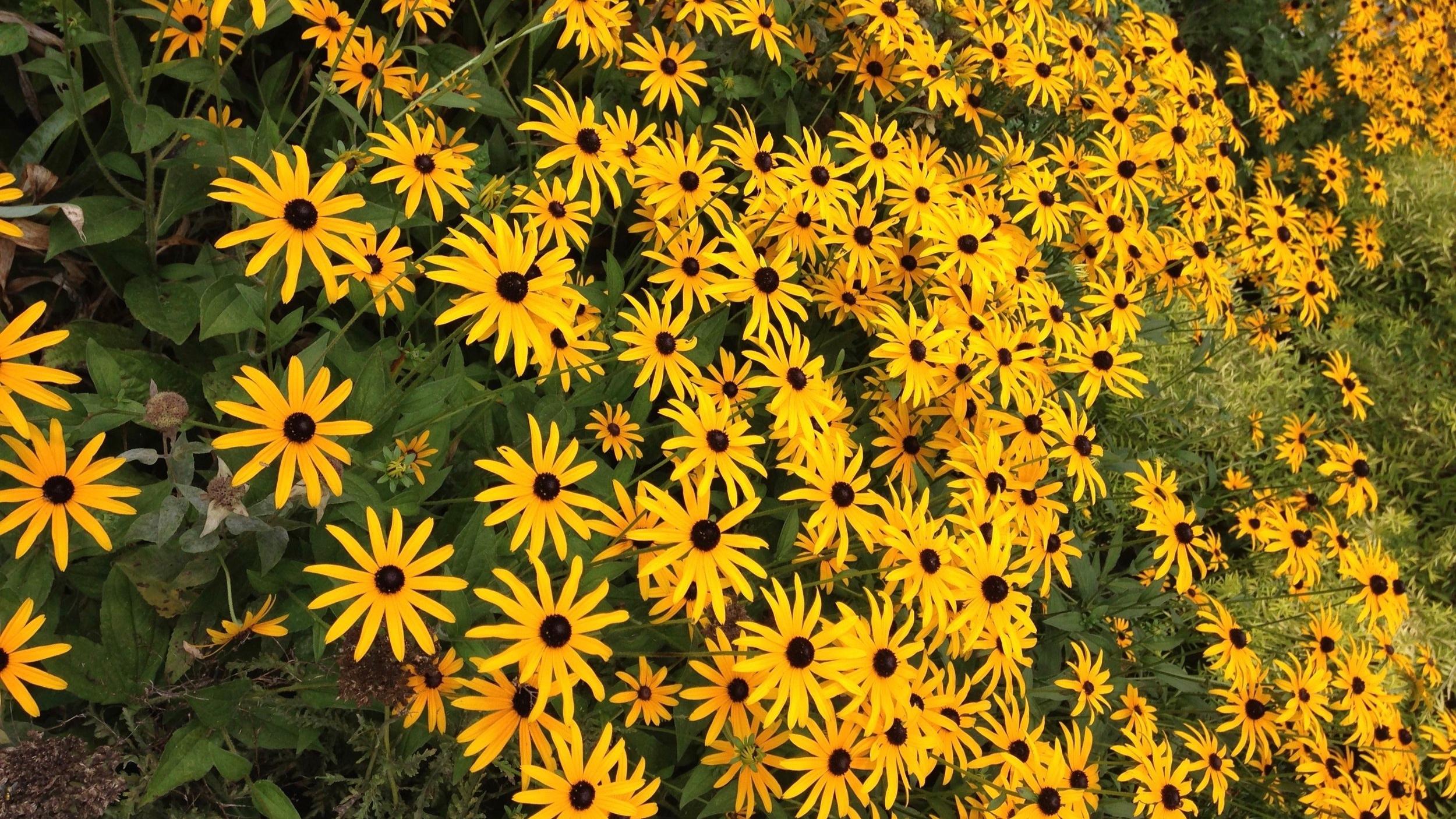 flowersLH.jpg
