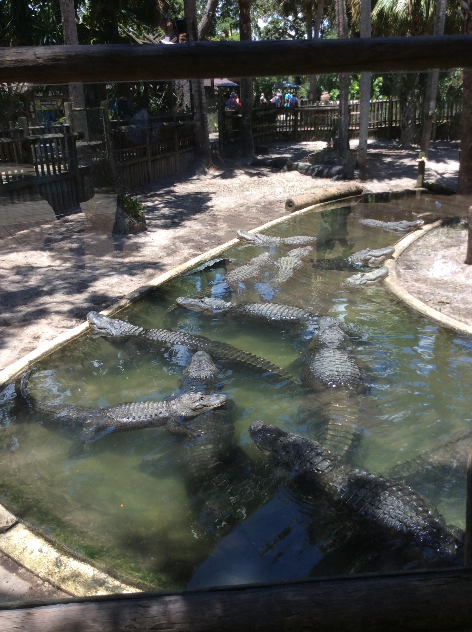 We went to the Alligator Farm
