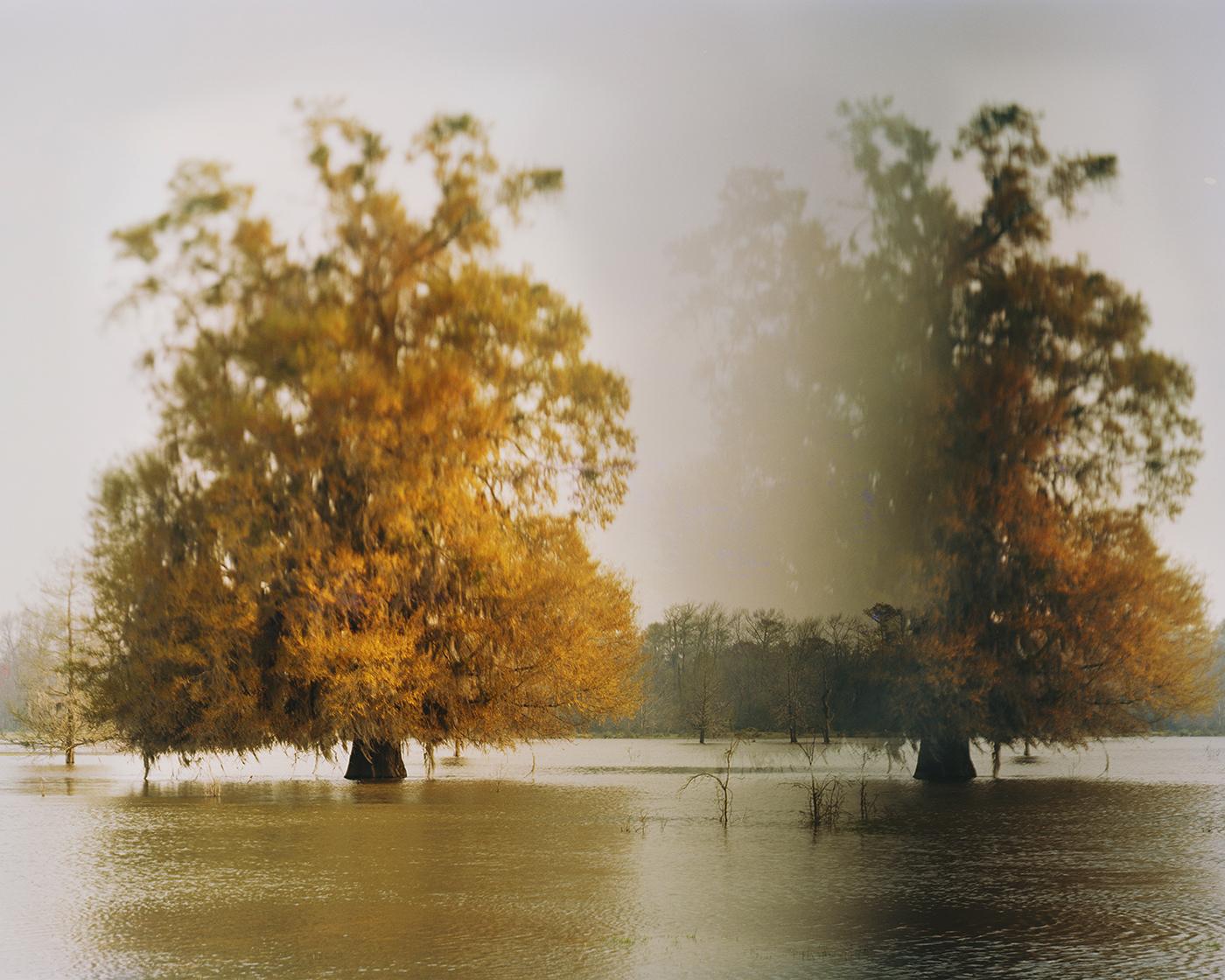 Disappearing Cypress, Altamaha River, Georgia
