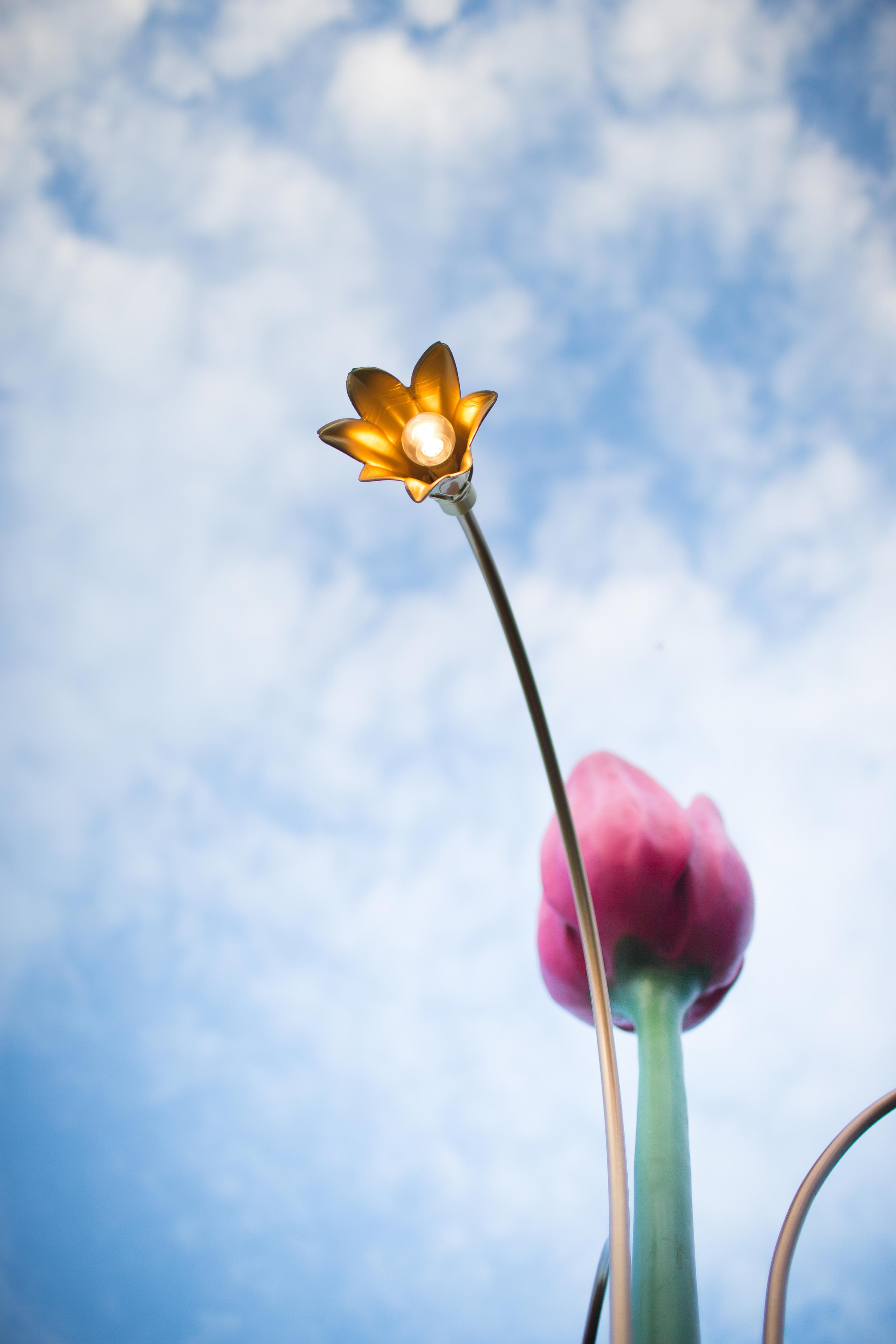 FOSFOR Flowerbin-1105.jpg