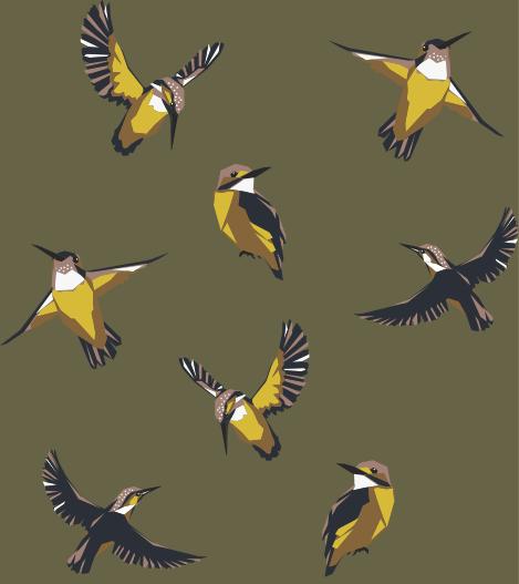 EVA WILLEMS - birds&bees7.png