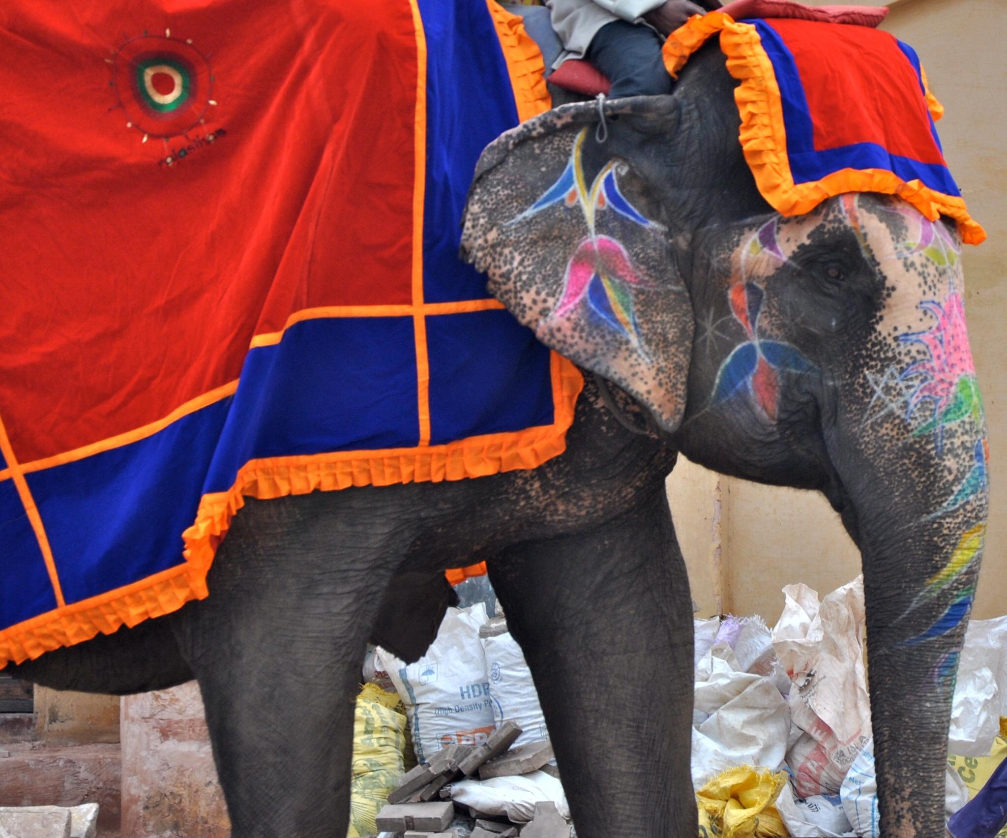 painted elephantjpg.jpg