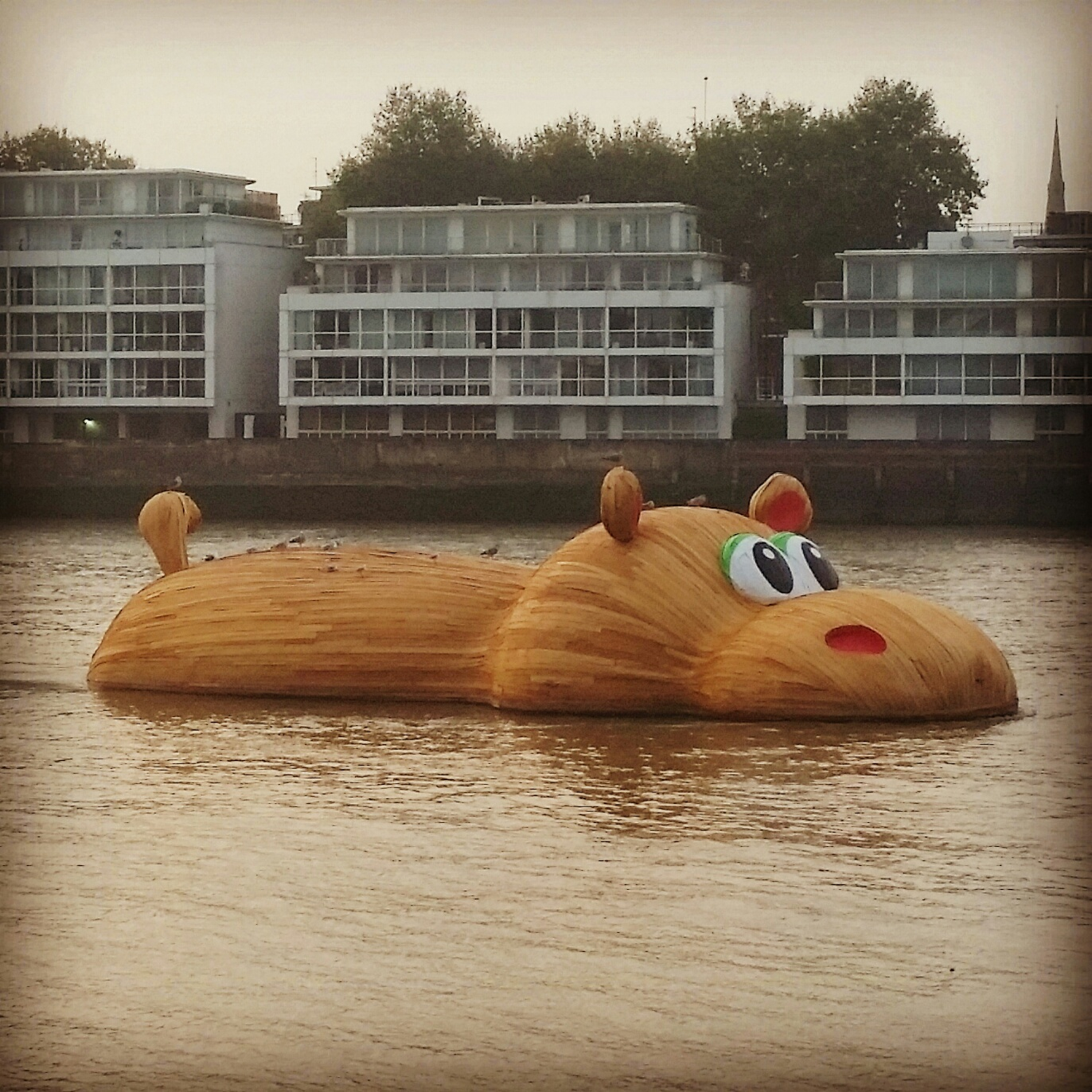 From Florentijn Hofman, the Dutch artist who brought the world the giant  Rubber Duck  (my favorite), here is the 69-feet-long  HippopoThames .