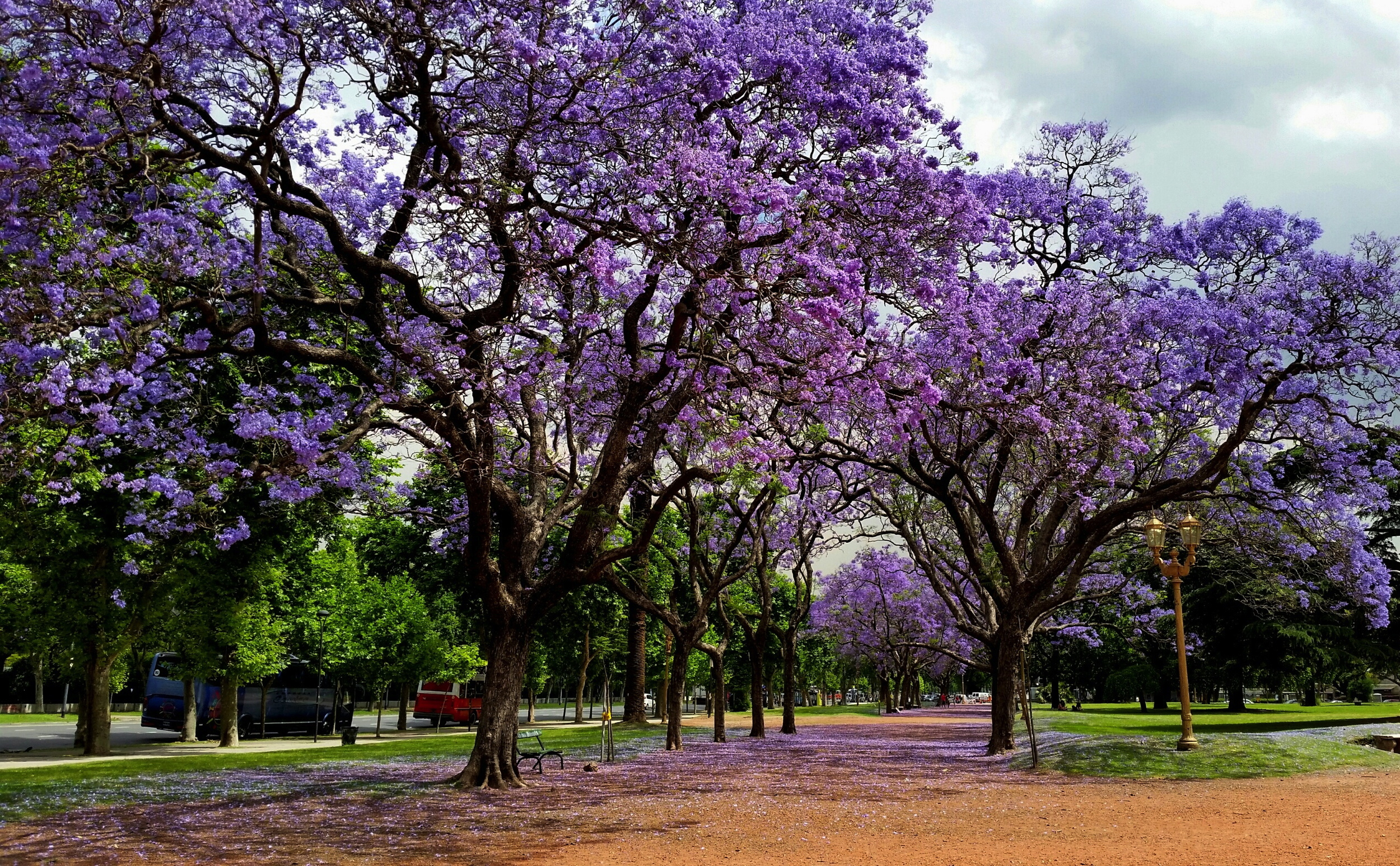 Jacaranda trees on the Plaza Intendente Seeber on the corner of Avenida Sarmiento and Avenida del Libertador in Palermo, Buenos Aires. As it turns out, the Plaza is in front of the US Embassy...I guess I was just magnetically drawn to the area.